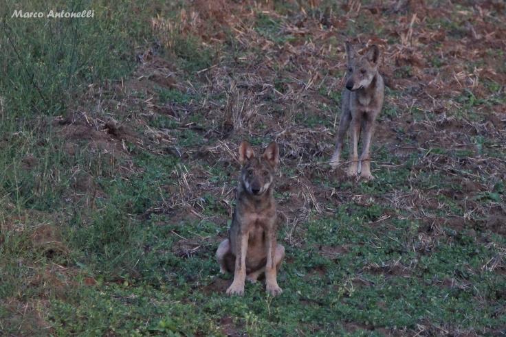 marco e i lupi 3