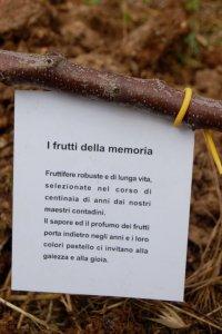 maria alberi da frutto