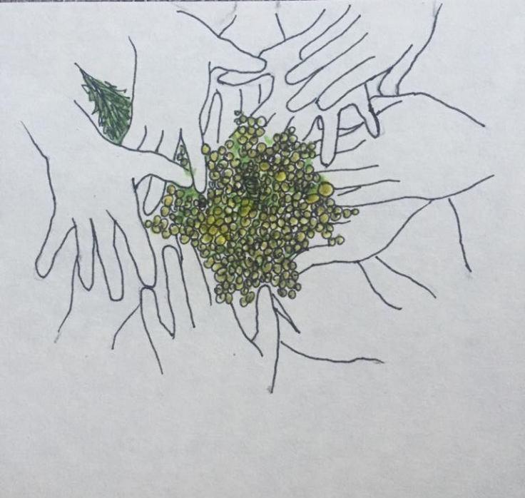 reama mimosa mani lilli
