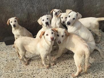 oasi cani belli