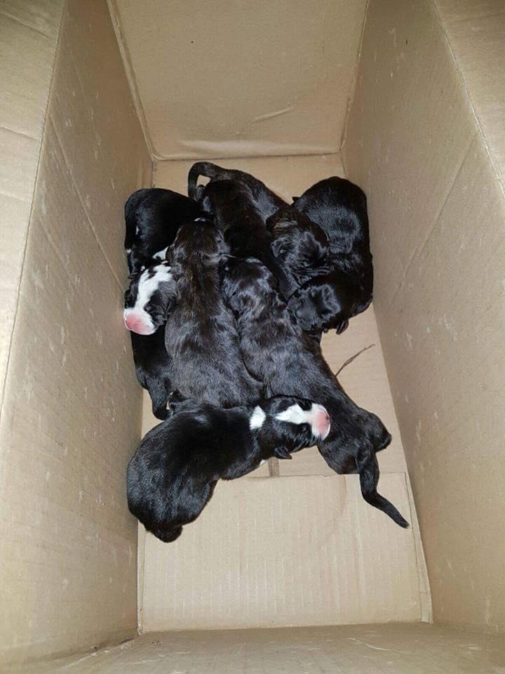 oasi scatolone cuccioli