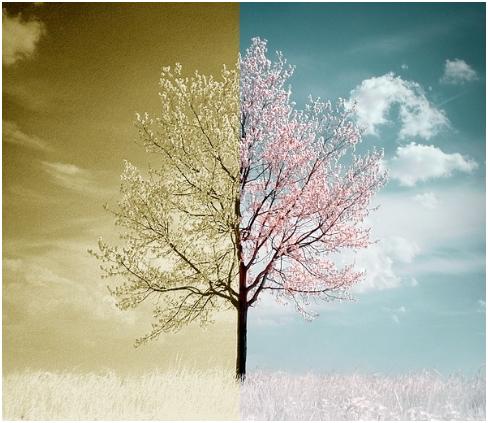 noi come prima albero