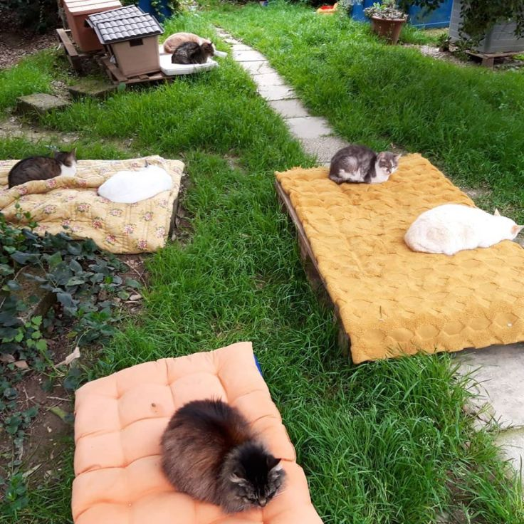 olmo gatti in giardino