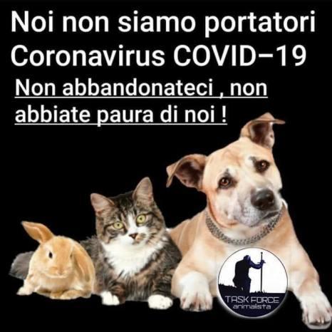 olmo non coronavirus
