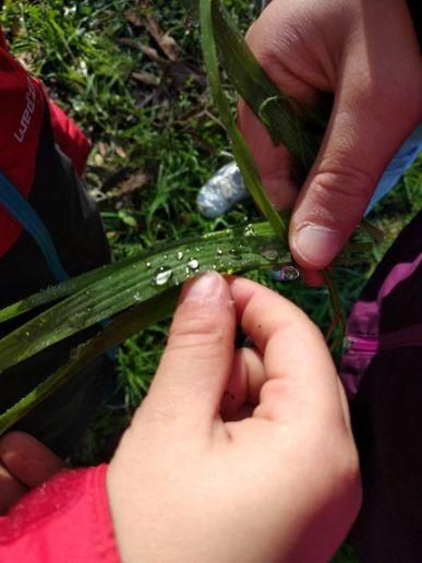 valentina bambini fili di erba