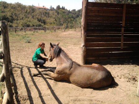veronica e i cavalli