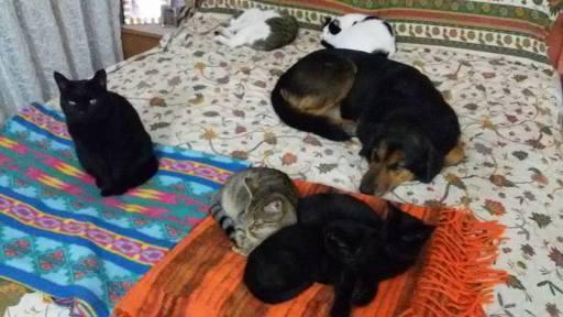 patrizia gatti e cani iniseme